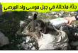 بالفيديو العثور على جثة متحللة في جبل موسى بواد المرصى لم يعرف صاحبها لحد الان