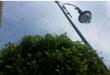 خبراء يكشفون حقيقة انتشار الذباب الاصفر بجهة طنجة تطوان