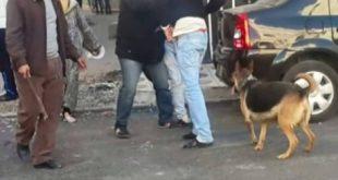 """شرطي بفاس يطلق الرصاص على """"كلب شرش """"هاجم الشرطة أثناء اعتقال صاحبه"""
